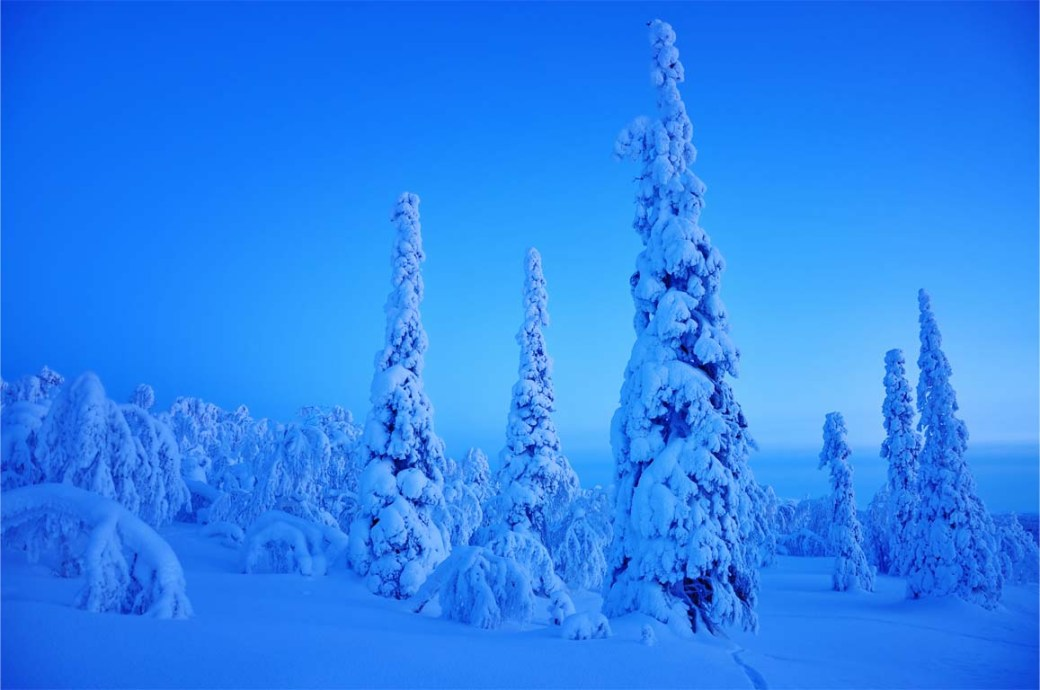 Winter, snow covered tree landskape at dusk