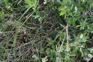 Look closely and you'll see eggs in the nest we found in the bush by our tent. Mama came back and covered them during our stay, and we tried to be careful and not disturb.