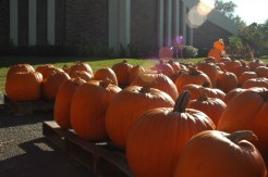 Methodist church pumpkin patch