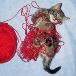kitten-with-yarn