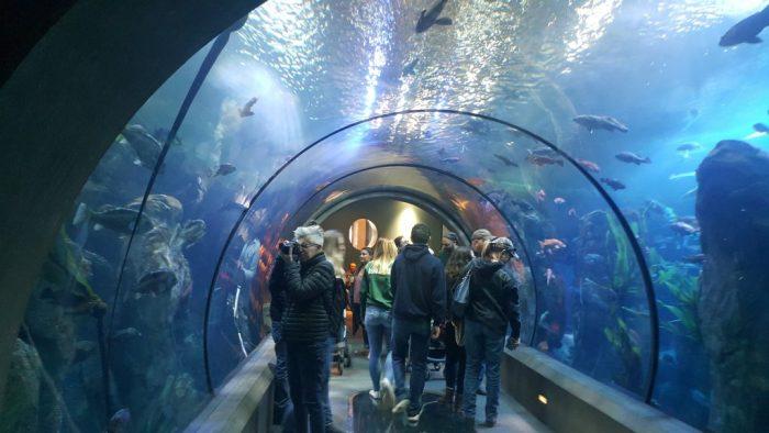 Passages of the Deep Oregon Coast Aquarium