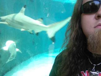 noah shark is Making Waves