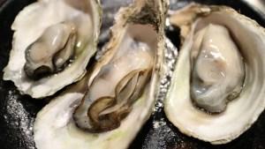 oyster.rebelretirement.450