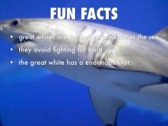 fun facts shark2
