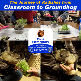 Cone Elementary's Radishes go from Classroom to Groundhog