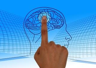 O cérebro no comando