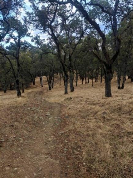 The Trail of the 50 Mile Overlook Ultra Marathon Endurance run