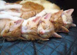 gatos a dormir.jpg