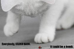 cat-bomb.jpg