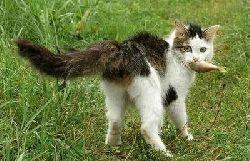 cat-fish.jpg