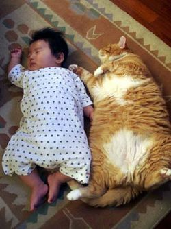 funny-picture-cat-baby-kid02.jpg
