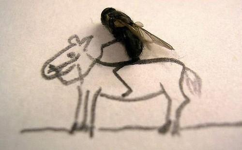 arte-moscas-2