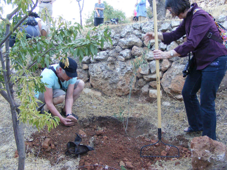 Planting trees in Bethlehem