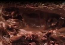 Receita de Bolo de Brigadeiro e Raspas de Chocolate