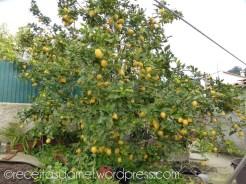 citronier-receitasdamel