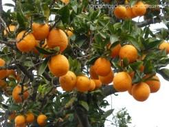 orange-receitasdamel