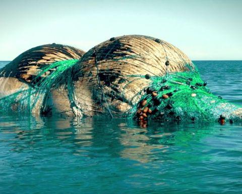 Recensione Seaspiracy documentario netflix