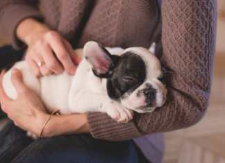 FDA warns concerning pet dog foods, which could bring heart problem