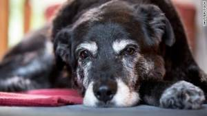 NEW Study Suggests: Dogs rush to help when owners cry