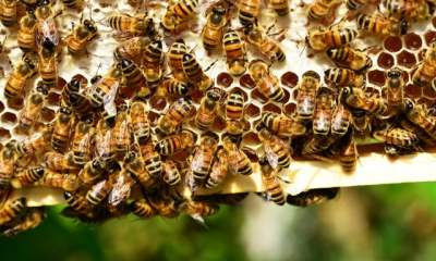 How to Get Rid of Carpenter Bees (Bee-Friendly Ways and Preventive Measures)