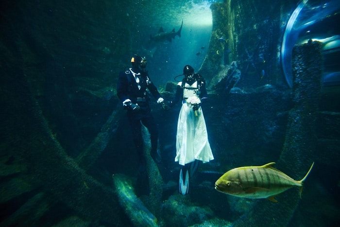 inside underwater wedding