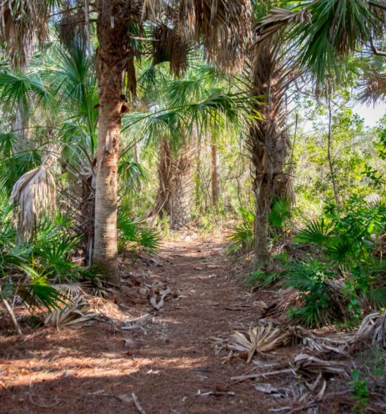 Warmer temperatures free tropical soils from carbon dioxide
