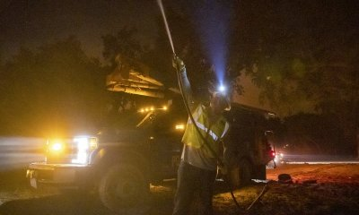 When a tree fell on a power line in California, it started a wildfire.