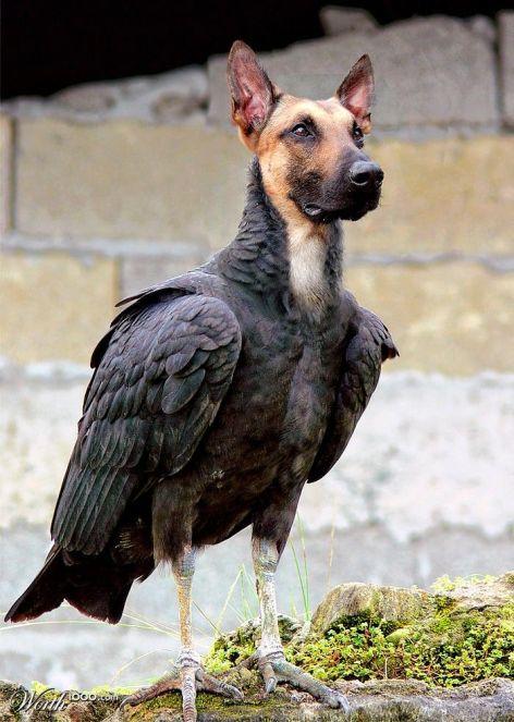 BirdDog12