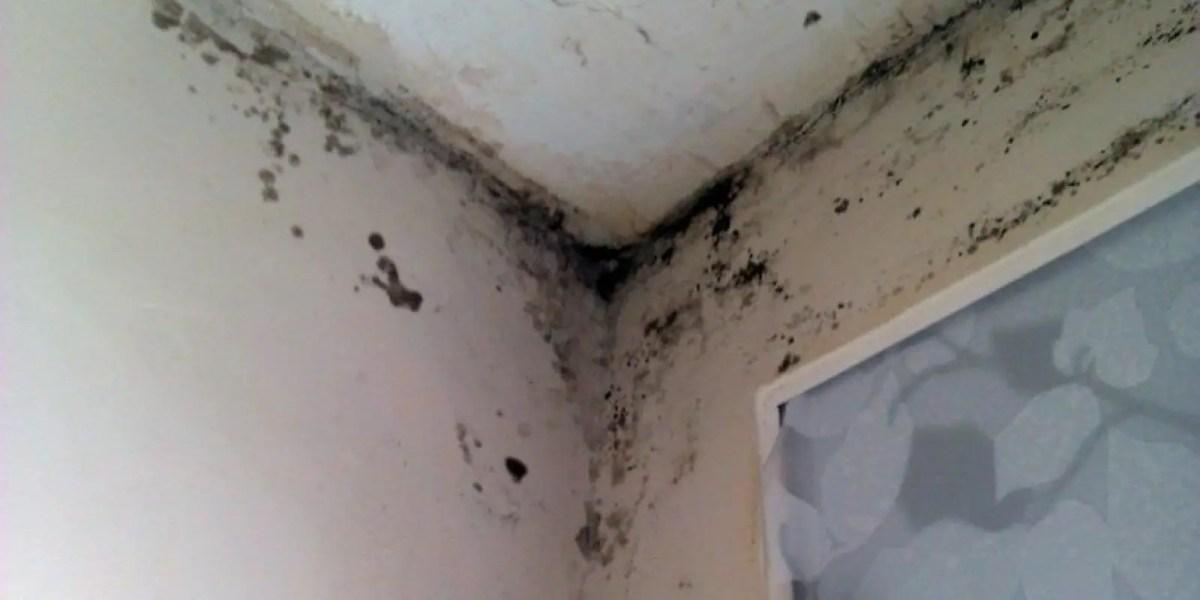 humedad en paredes - Reciclaje de verduras o tempura de verduras