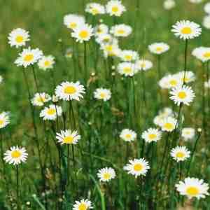 82dbf6cae1772ebce3f61a4b34447ba4 - ▷ Entra la primavera 📖