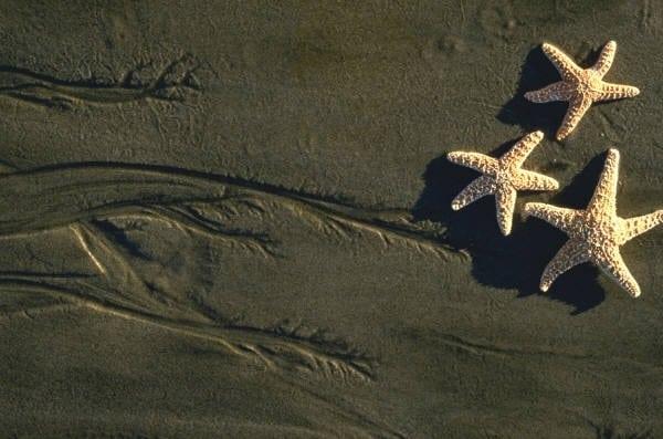 753da7a1edb284e4c2d5ea8068e48c7c - ▷ Playa misteriosa 📖