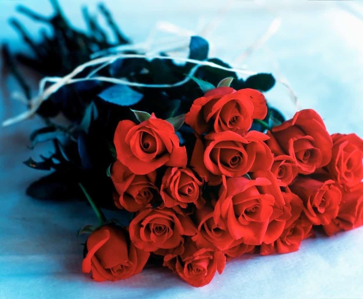 97c9669c01b9143a268bf27097877607 - ▷ Doce rosas 📖