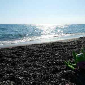 8dcbd65e1b504cf67097f96ae2a567bd - ▷ Embriagarse de olor a mar ✍