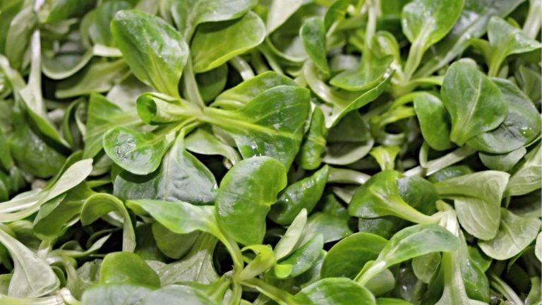 fruits legumes saison mache