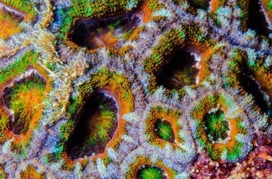 Macro de polypes arc en ciel