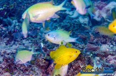 Male au milieu d'un groupe de femelles.
