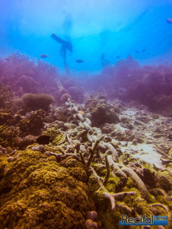 Une des chaînes nettoyée de ses coraux.