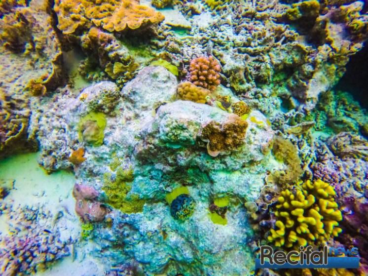 Un rocher ensemencé avec des petites colonies détachées des chaines.