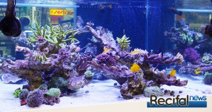 poisson-or-aquarium-recifal-côté