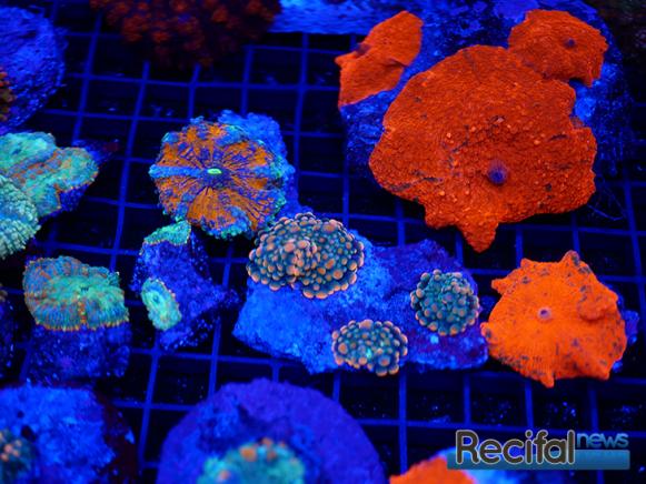 mace-vivarium-2019-coraux-11