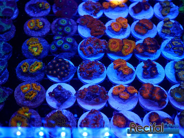 mace-vivarium-2019-coraux-15