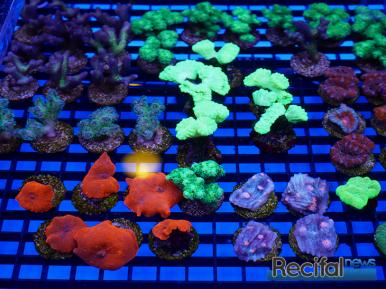 mace-vivarium-2019-coraux-19