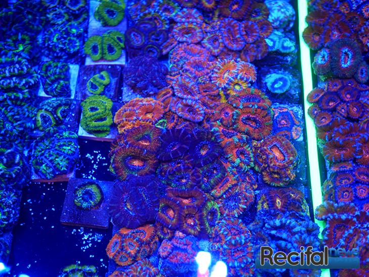 mace-vivarium-2019-coraux-26
