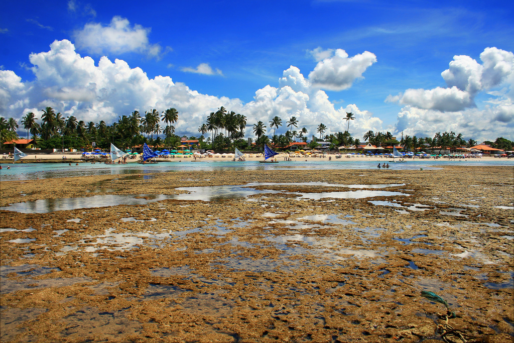 Natural reefs exposed at low tide