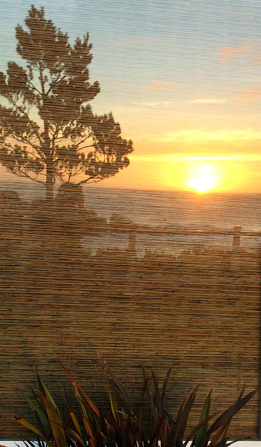 sunset-reflection-whale-cove-2015