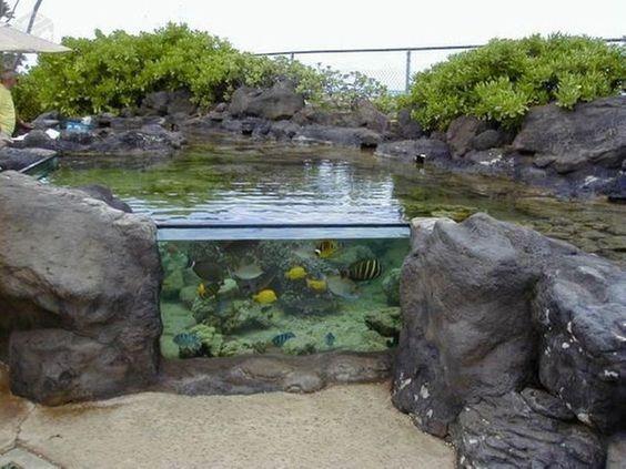 above ground koi pond 15