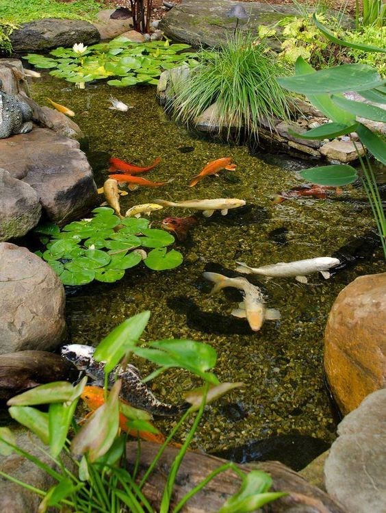 koi pond landscaping 9
