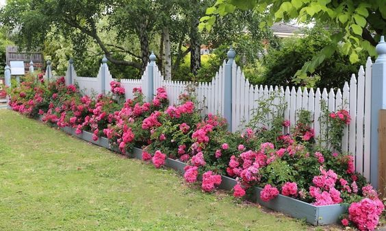 flower backyard ideas 4