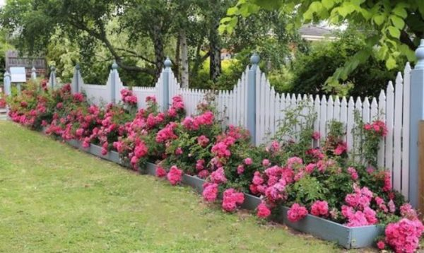 flower backyard ideas feature