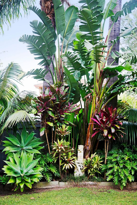 tropical backyard ideas 2